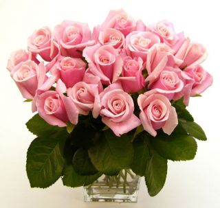 Pink Long Stem Roses (20 Stems)
